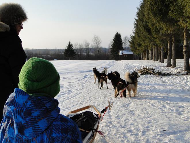 traineau-a-chiens-manitou-mushers