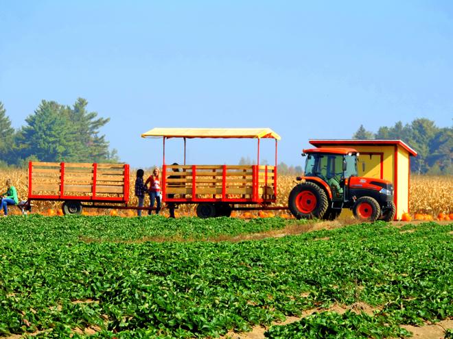 cueillette-citrouille-balade-tracteur-ferme-ethier