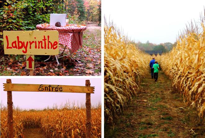 cueillette-de-citrouilles-labyrinthe-champs-mais1