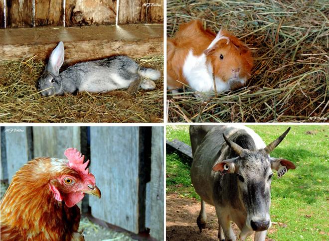 Zoo rencontre avec les animaux