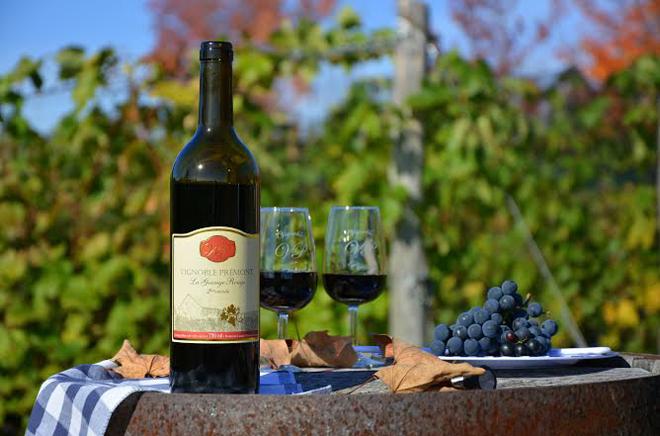vignoble--premont-mauricie-vin