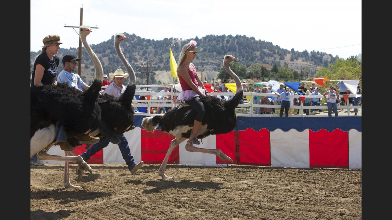 Ostrich racing at Virginia City International Camel Races | Virgina City, Neveda