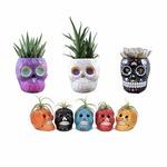 Plant-filled_ceramic_skulls_%28seasonal%29