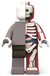 Platform: Anatomic
