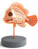 Nemo Anatomy