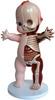 """Kewpie Anatomy (22"""")"""