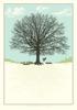 Dreaming Tree Prequal (GID)