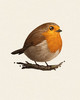 Fat Bird - Robin
