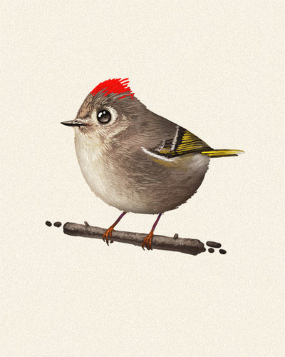 Fat_bird_-_ruby-crowned_kinglet-mike_mitchell-gicle_digital_print-trampt-76396m