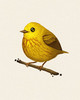 Fat Bird - Yellow Warbler