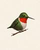 Fat Bird - Ruby-throated Hummingbird