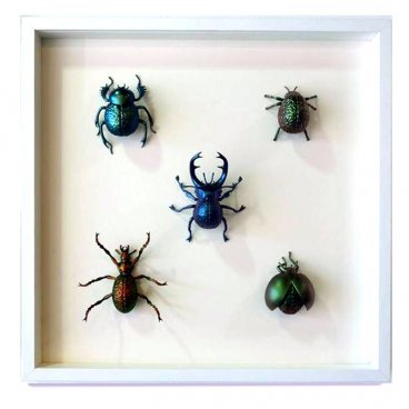 Five framed bugs - collection Mixed Media by Toky... | Trampt Library