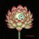 The Day's Eye - Lotus