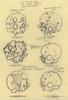 Terror Boy: Skull Study