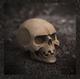 Skull – bone white