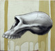 Afarensis Skull