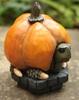 Wartoise Pumpkin