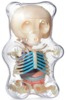 Gummi Bear Anatomy Puzzle Toy - Clear