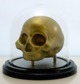 Skull Specimen - fancy edition