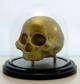 Skull_specimen_-_fancy_edition-brutherford-skull_specimen-brutherford_industries-trampt-188645t