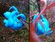 Neon Bluetoed Sloth n Moth