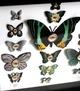 Cabinet_of_curiosities_specimen_no_192-mab_graves-mixed_media-trampt-224445t