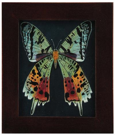Rainbow_moth-becca_stadtlander-gouache__ink-trampt-237951m