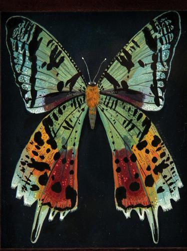 Rainbow_moth-becca_stadtlander-gouache__ink-trampt-237952m