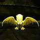 Skull bat (ORANGE GLOW: 1% CUTE)