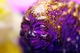 Royal_breakfast_sludge_demon_set-lash_rich_montanari-sludge_demon-self-produced-trampt-273159t
