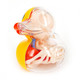 Rubber_ducky_anatomy-jason_freeny-4d-fame_master_toys-trampt-276412t