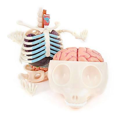 Gummi_bear_anatomy_puzzle_toy_-_clear-jason_freeny-gummi_bear_anatomy-fame_master_toys-trampt-278678m