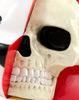 Dissected_bear_head_white-clutter_luke_chueh-dissected_bear_head-clutter_studios-trampt-287770t