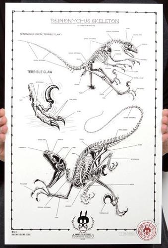 Deinonychous_skeleton_no03-nychos-1-color_screen_print_on_300_gm_munken_pure_paper-trampt-289446m