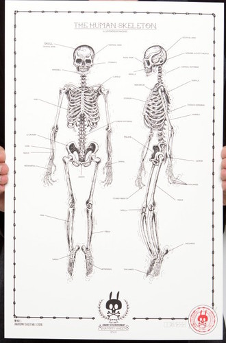 The_human_skeleton_no01-nychos-1-color_screen_print_on_300_gm_munken_pure_paper-trampt-289448m
