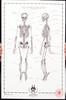 The Human Skeleton No.01
