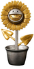 Gold & Silver Shocking Sunflower (Gold Grin)