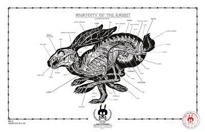 Anatomy_of_the_rabbit_-_no18-nychos-screenprint-trampt-297988m