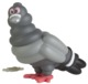 Staple Pigeon