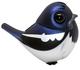 Oriental Magpie Robin (TTE '19)