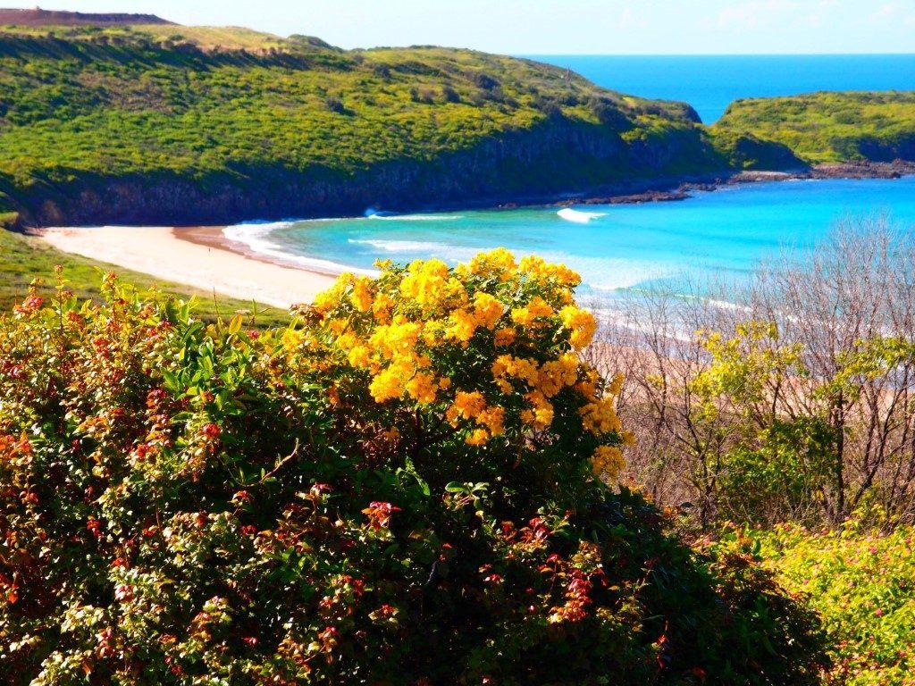 Killalea Beach Flowers