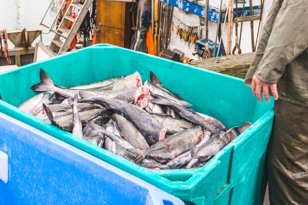 Kiama Fishing Charters Bucket Full