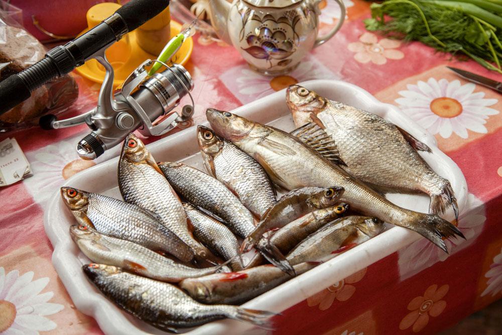 Kiama Fishing Charters Fish