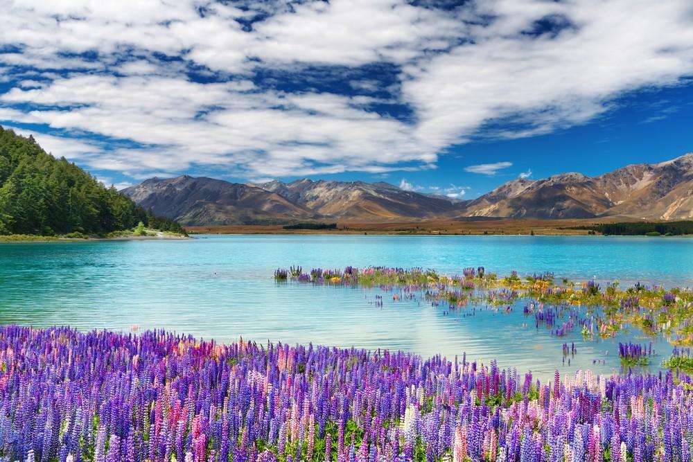 Best Time of Year to Go to New Zealand - Lake Tekapo