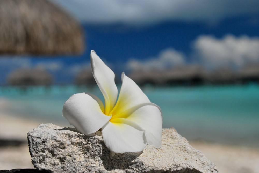 Bora Bora facts Bora Bora flowers