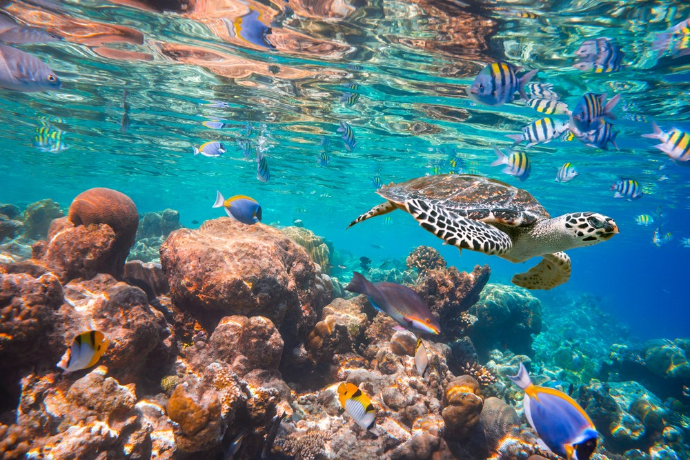 Activities and attractions on the Maldives Explore underwater life