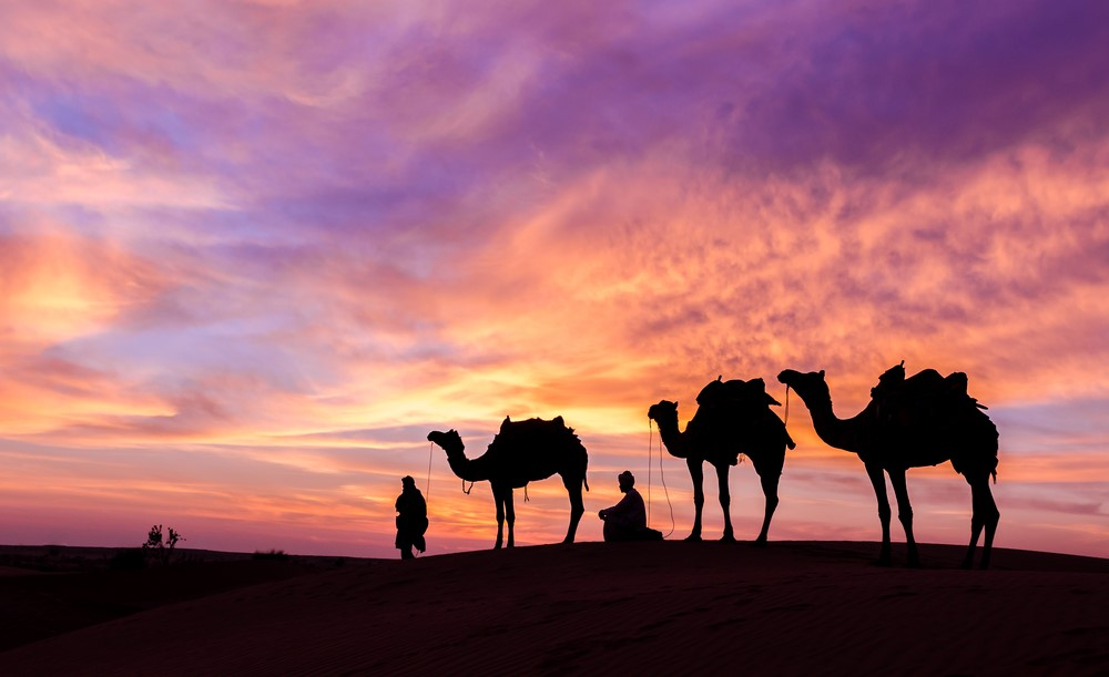 Things to do in India Take a desert safari