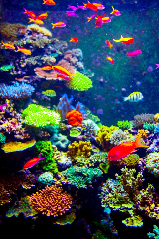 Facts about Fiji Underwater life