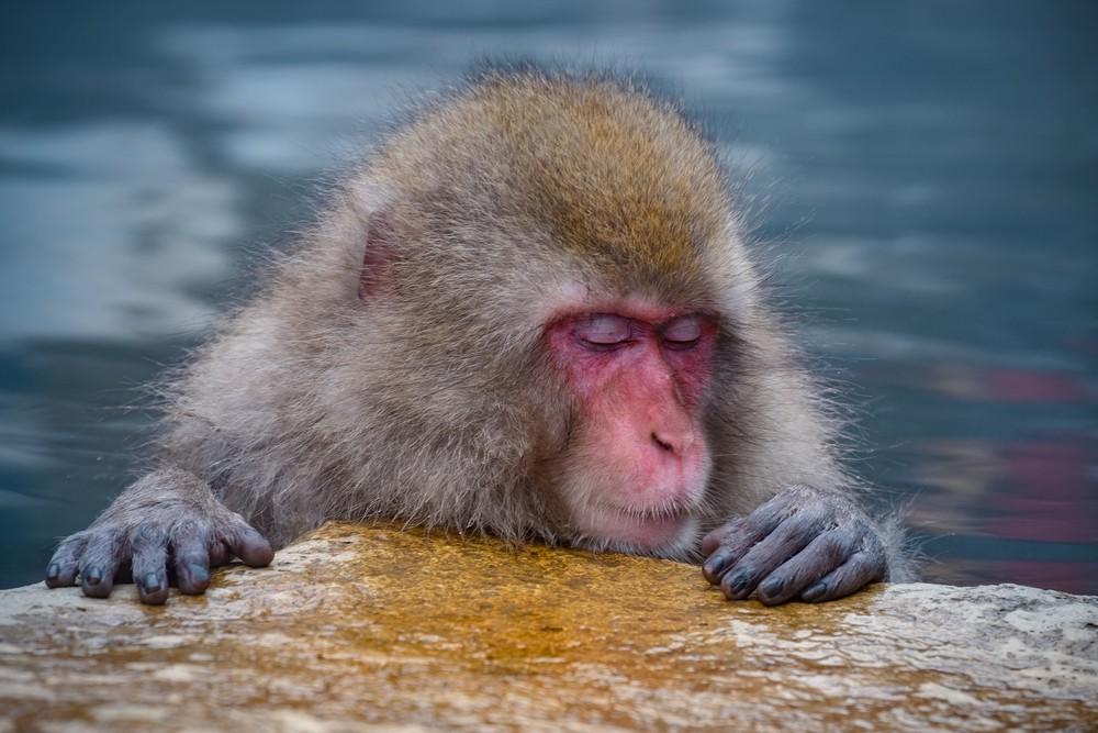 10 Weirdest Things in Japan - Monkeys in a Hot Bath