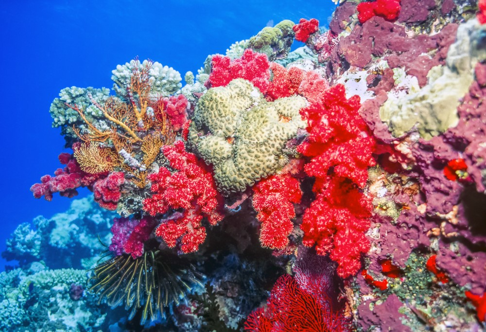 Things to do in Fiji Explore the underwater life